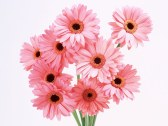 image of a bunch of pink flowers